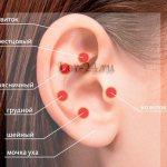 Козелок уха